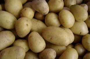 Plantar patatas en Estados Unidos