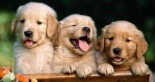 Los perritos