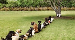 La paciencia de los perros