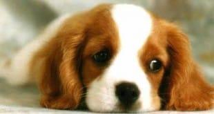¿Quién dijo que los perros no piensan?