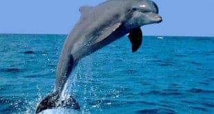 El delfín y la piscina