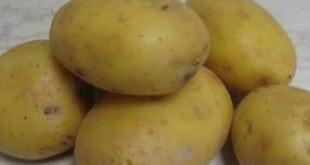 Niños y patatas