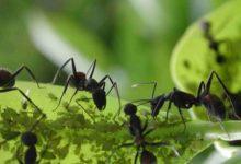 Photo of Diabetes, hormigas y Lady Gaga