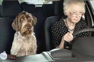 Pregúntale al perro