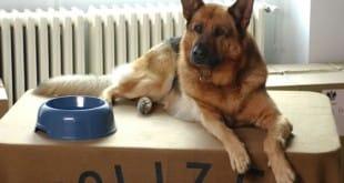 Perro rastreador de semen descubre a violador