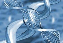 El estrés causa daños en el ADN