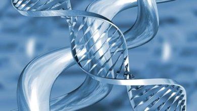 Photo of El estrés causa daños en el ADN