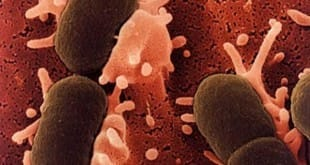 Alteraciones en el comportamiento producidas por las bacterias intestinales