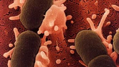 Photo of Alteraciones en el comportamiento producidas por las bacterias intestinales