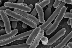 Red social para personas con la misma flora intestinal