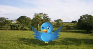 Twicsy, motor de búsqueda de fotos en Twitter