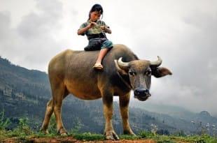 La niña y el búfalo