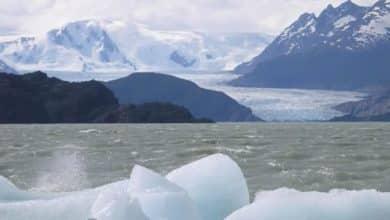 Semillas polizones en la Antártida