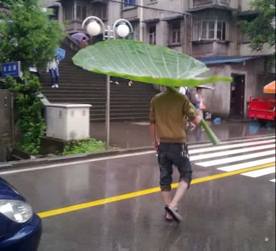 Yo quiero un paraguas como este