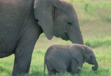 Photo of Familia de elefantes