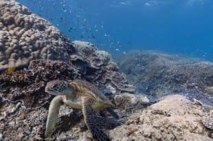 Imágenes submarinas en Google Maps