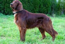 Photo of Vida de perro