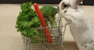 El conejito va de compras