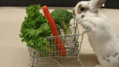 Photo of El conejito va de compras