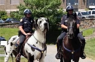 El perro caballo