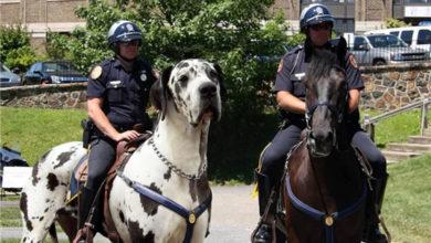 Photo of El perro caballo