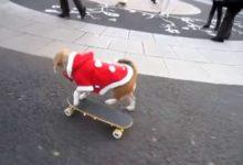 Photo of Los perros también practican skateboarding