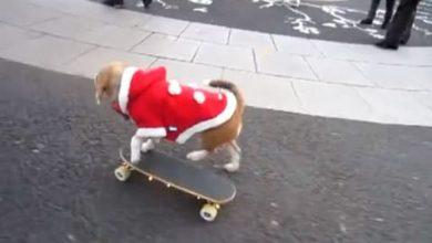 Los perros también practican skateboarding