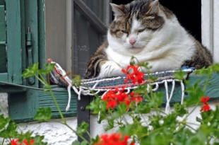 El gato relajado