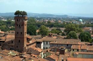 Robles en la cima de la torre