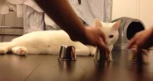 El gato y el trilero