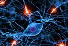 Photo of Células que se comunican a distancia, células psíquicas