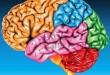 Imágenes cerebrales para medir el dolor