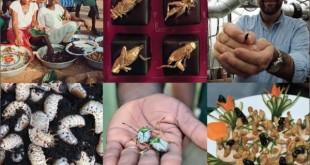 Comer insectos para saciar el hambre en el mundo