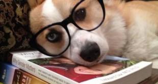 El perro lector