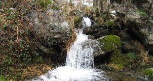 WebQuest - El agua y la vida