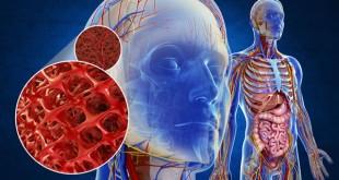WebQuest – El aparato circulatorio en el ser humano