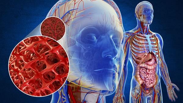 WebQuest - El aparato circulatorio en el ser humano