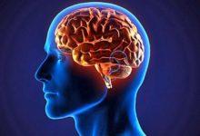 Photo of WebQuest – El cerebro humano