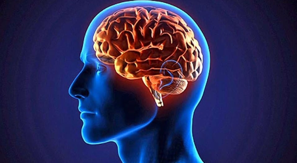 WebQuest - El cerebro humano
