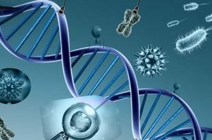 WebQuest - Genética