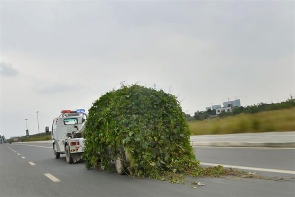 Transporte del coche zombie