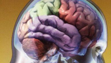 El cerebro está en huelga
