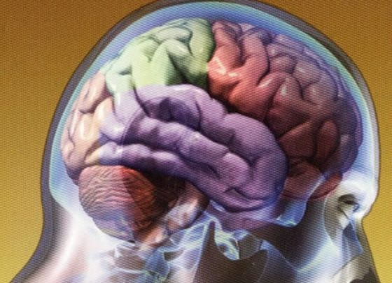 Photo of El cerebro está en huelga
