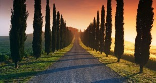 Camino sin retorno