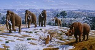Los mamuts tenían anticongelante