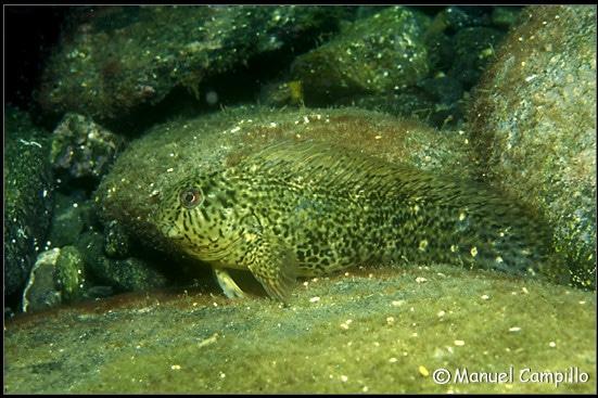 Fotos subacuáticas, una vida bajo el mar