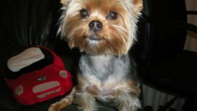 Photo of Los 10 mandamientos de un perro