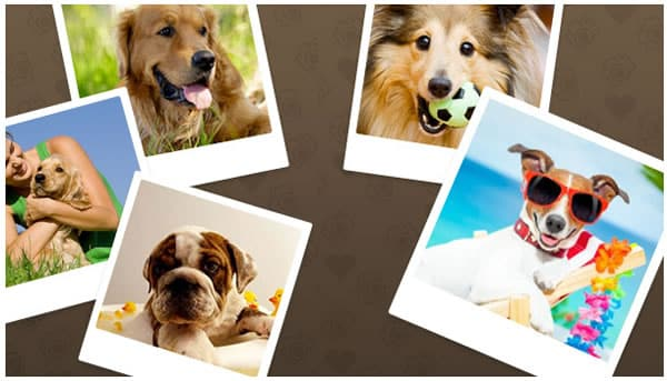 Red social para mascotas