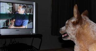 Los perros y la televisión