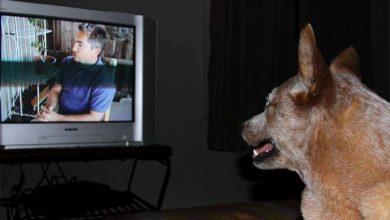 Photo of Los perros y la televisión